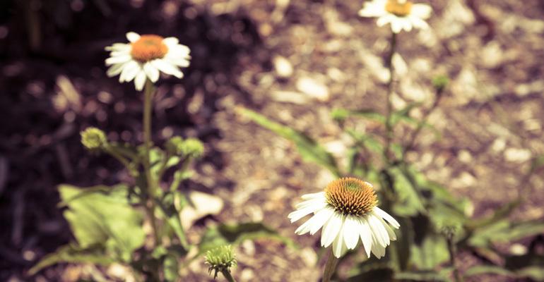 Nature-Pic-13