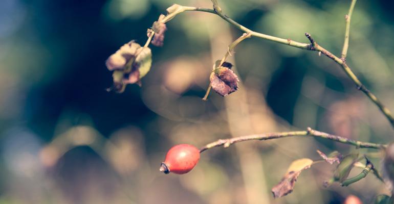Nature-Pic-16