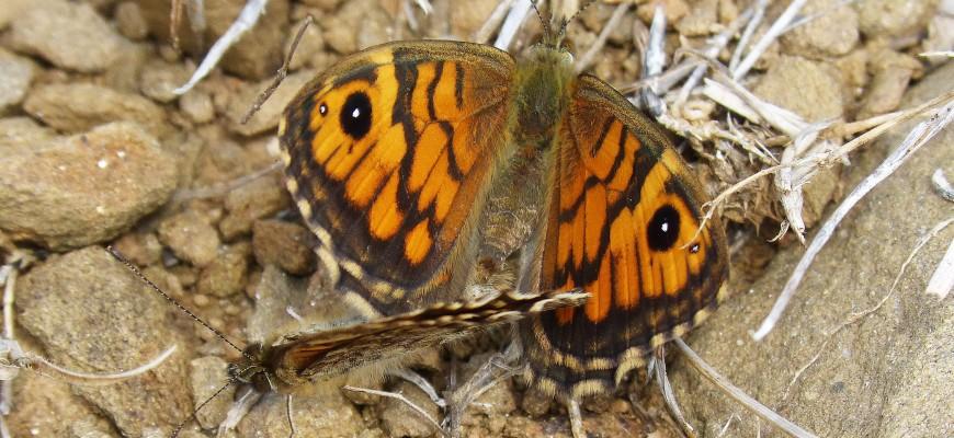 butterflies-953944